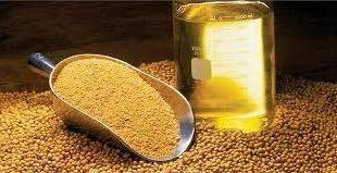 قیمت تولید دانه روغنی بادام