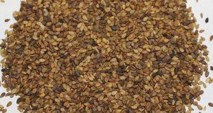 قیمت دانه روغنی کنجد شسته شده
