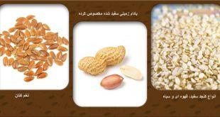 پخش انواع دانه های روغنی