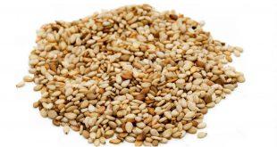 فروش عمده دانه روغنی کنجد هندی، پاکستانی و افغانی